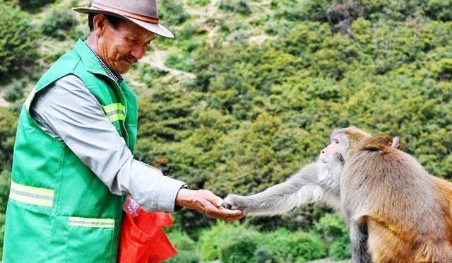 با با ئے بندر نے سو شل میڈیا پر دھوم کیسے مچائی،بندروں کی کفالت کیوں شر و ع کی