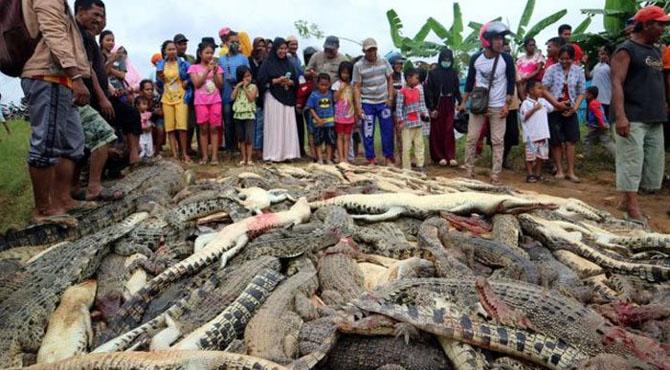 انڈونیشیا میں مشتعل ہجوم نے 300 مگر مچھ مار ڈالے