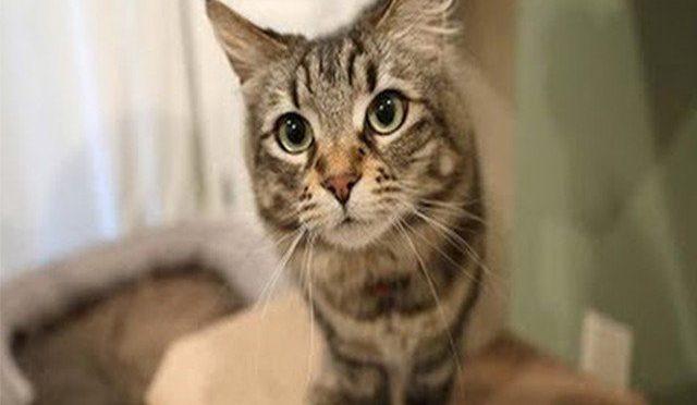 سیلیکون ویلی مہنگے ترین فلیٹ کی کرائے دار بلیاں