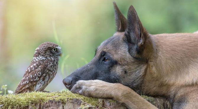 کتے اور الو کی بے مثال دوستی کی نئی تصاویر وائرل