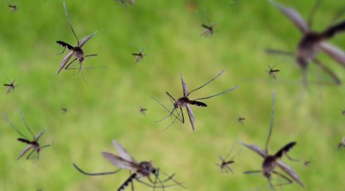 مچھروں سے بچاؤ کیلئے نئی کوششیں شروع