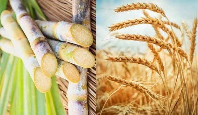 گندم کی امدادی قیمت خرید، 1400 گنے کی 200 روپے تک ہونے کا امکان