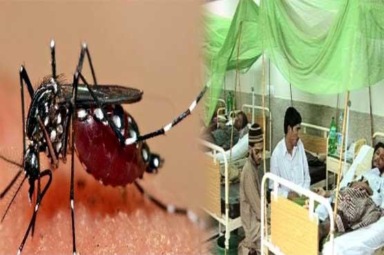 راولپنڈی میں ڈینگی مچھر نے ایک اور جان لے لی