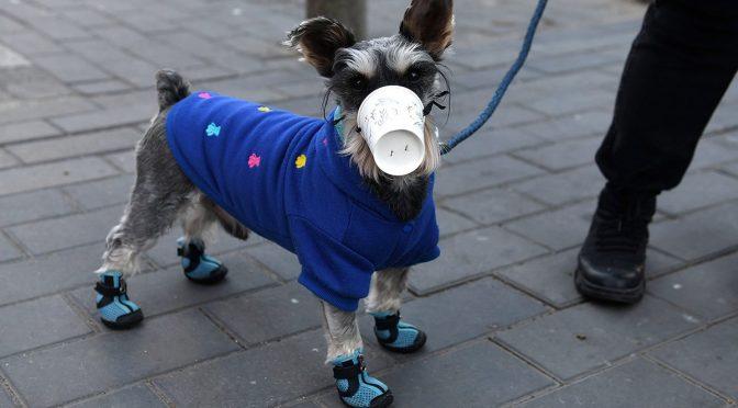 کورونا وائرس: چین میں جانوروں کو بھی ماسک پہنائے جانے لگے
