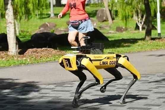 کورونا وائرس: روبوٹک کتے سماجی فاصلے کا پیغام دینے کیلئے تیار